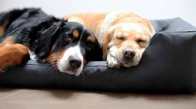 Dos perros durmiendo en un sofá