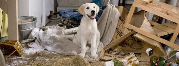 6 consejos para mantener limpia tu casa si tienes perro