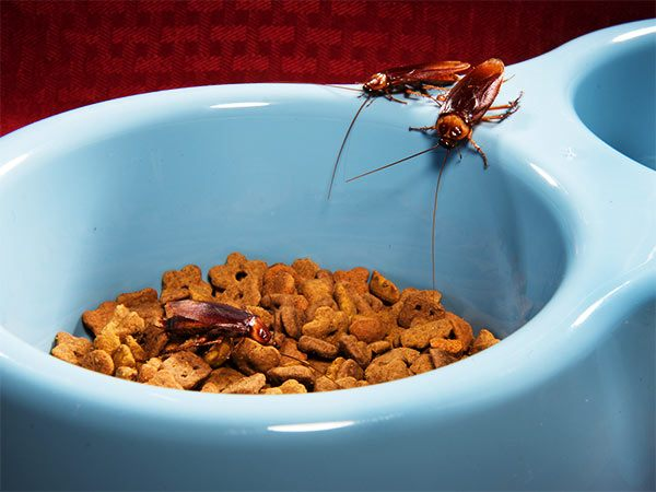 evitar que las cucarachas entren en casa