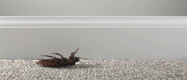 Eliminar las cucarachas en casa y mantenerlas a raya