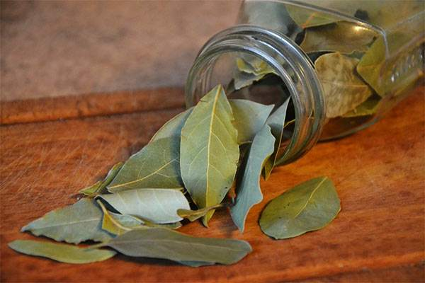 usar hierbas aromáticas contra las cucarachas