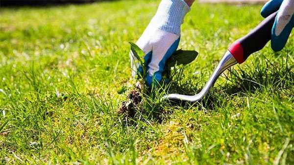 eliminación de malas hierbas