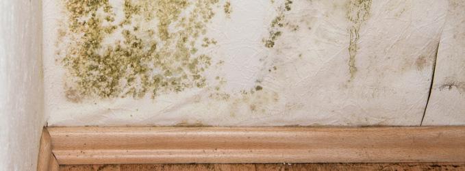 Cómo quitar el moho de las paredes de tu casa para siempre