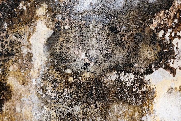 Humedad en las paredes que genera mal olor