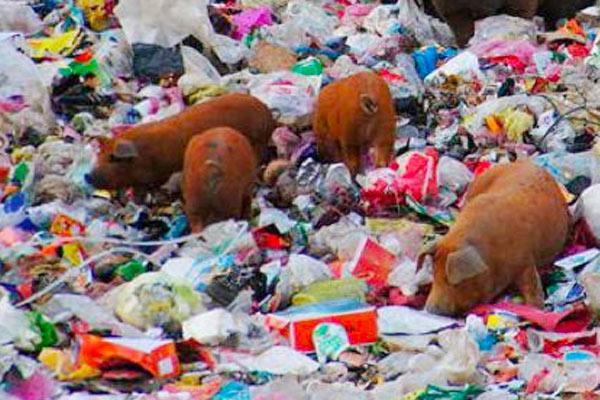 Animales afectados por los residuos del ser humano en la naturaleza